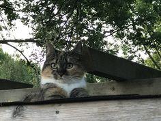Sun op de pergola Cats, Animals, Gatos, Animales, Animaux, Kitty, Cat, Cats And Kittens, Animal