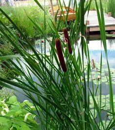 Cattails complement this water garden.