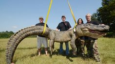 An alligator hunting record in Mississippi was broken for the third time in a week, wildlife officials there say, after the state's heaviest gator was caught.A 13-foot, 6.5-inch gator weighing 741.5 pounds was taken by Dalco Turner of Gluckstadt, Miss., on Sunday morning on the Mississippi River near Port Gibson. It took Turner and two other hunters an hour to finally snare him.