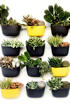 8 Best Sunflower Wally Eco Wall Planter Ideas Wall Planter Vertical Garden Wall Planter Vertical Garden Wall