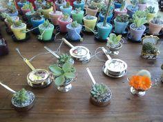Cactos em vasos miniaturas