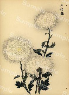 Lovely KORIN ukiyo-e Japanese woodblock original by Printvilla4you Antique Prints, Chrysanthemum, Wood Print, Period, This Book, Delicate, Gardening, Japanese, The Originals