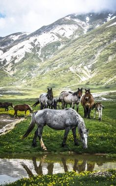 Campo Imperatore, Italy. The writer and explorer Fosco Maraini described it as Tibet on a small scale, in the valley of Phari Dzong, coining the term 'Little Tibet', which is still in. In this plateau there are herds of wild horses, cows and is still practiced transhumance. In recent decades several hermits returned in these mountains.