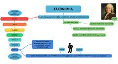 mapa-bio-taxonomia