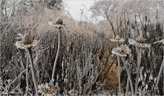"""Piet Oudolf on Designing a Winter Garden. """"If you make a four-season garden you have to learn to accept decay and see the beauty of it. It's about the texture and shape, the seed heads and the skeletons. So instead of using the scissors you use your eyes."""""""