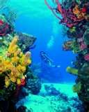 Palancar Reef, Cozumel, Mexico - Explore this famous reef system off the Cozumel coast and be dazzled by huge coral formations and the passing parade of technicolor tropical fish an undersea critters!