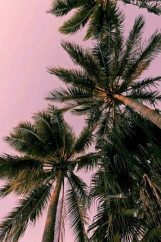 """draftthemes: """"draftthemes: """"hashpe: """"  Magenta AF 