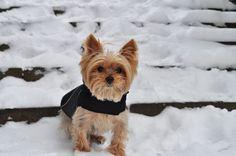 snowy cuteness