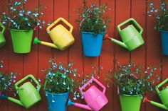 Watering cans & pails