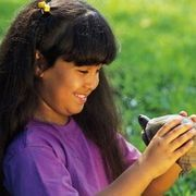 Box Turtle Facts for Kids