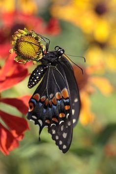 Lovely Butterfly on Flower