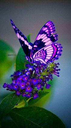 Beautiful Butterfly Pictures, Butterfly Photos, Beautiful Bugs, Butterfly Wallpaper, Butterfly Flowers, Butterfly Wings, Beautiful Butterflies, Animals Beautiful, Insect Photography