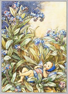 The Forget-me-not Fairy Cicely Mary Barker Flower Fairies Vintage Print 1995 Wall Art Nursery Decor Fairy Print Home Decor Print Fine Art Cicely Mary Barker, Fairy Dust, Fairy Land, Fairy Tales, Flower Fairies, Fairies Garden, Fantasy Kunst, Fantasy Art, Images Vintage