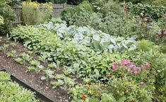 Gemüsegarten mit Zaun