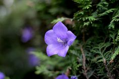 Purple in the Shadows | Flickr - Photo Sharing!