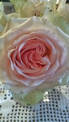Fading beauty... Peanut Butter, Rose, Flowers, Plants, Beauty, Pink, Plant, Roses, Royal Icing Flowers