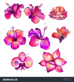 Bright Red Watercolor Hibiscus, Rose, Orchid, Lily Flowers Collection, Floral Tropical Set Illustration - 401963767 : Shutterstock