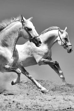 wild white horses running free... and showing to P! they will run out of their business if nothing changes in their policy...