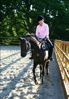 Unfortunately the website for Rehome My Horse has had to close My Horse, Horses, Wanted Ads, Devon, Animals, Animales, Animaux, Animal, Animais