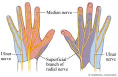 Nerves in the hand and areas of skin that get feeling from those nerves