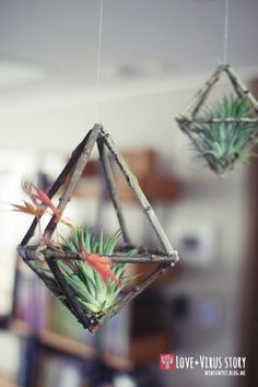 Tillandsia or commonly known as air plants are a type of plants that get their nutrients from the air. They don't require soil to thrive. Because of this unique feature, it allows a lot of di… planting 10 DIY Air Plant Holders For Your Home Air Plant Display, Plant Decor, Diy Hanging, Hanging Planters, Hanging Air Plants Diy, Plant Crafts, Plant Projects, Diy Projects, Deco Floral