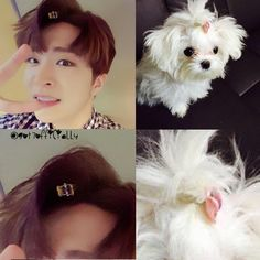 """10.8k Likes, 54 Comments - GOT7( 갓 세븐)Official (@got7officially) on Instagram: """"mother VS daughter . . youngjae oppa love yaaaaa❤️ . . #coco #neverever #got7 #Igot7❤️…"""""""