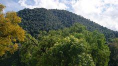 Michoacán y el Estado de México tendrán una coordinación interestatal en la Reserva de la Biósfera de la Mariposa Monarca para la prevención y combate de incendios forestales, aseguró el ...