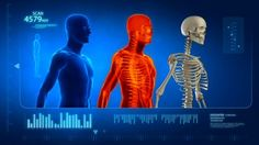 Human body scan with skeleton