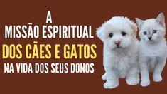 A missão espiritual dos cães e gatos na vida dos seus donos | Místico Zen Vice Versa, Small Cat, Zen, Pet Care, Animals And Pets, Mystic, Pet Pet, Dogs, Youtube