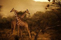 Kenya Tribal by Diego Arroyo
