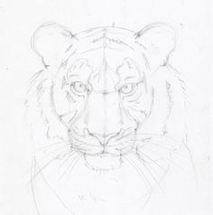 """Поэтапные уроки рисования карандашом """" Животные - cтраница 17"""