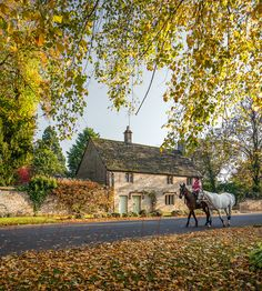 The Cotswolds, England | I can hear the horses hooves, smell the damp leaves, and feel the Autumn sunshine, peaceful snowdrops nestled beneath; the angels gift of life beyond the seasons of repair.HMA There is nowhere in the world like the Cotswolds, a unique and very special part of Britain  <3