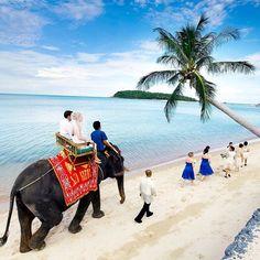 coussin-mariage.fr Koh Samui is one of Thailand's most popular wedding and honeymoon destinations. That is if elephants on exotic beaches is your thing.  #amazing #elephant #beach #palmtree #wedding #honeymoon #weddingparty #bride #groom #couple #newlyweds #romantic #romance #romancetraveler #luxury #exotic #destinationwedding #island #love #lovers #perfect #adventure #tbt #travel #kohsamui #thaitheknot #Thailand by romancetravelconcierge