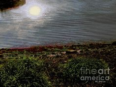 """Silvershine"" © 2015 RC deWinter ~ All Rights Reserved"