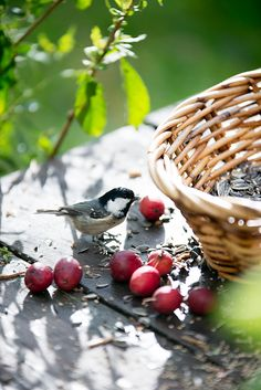 Country Living ~ birds, baskets, berries