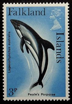 Items similar to Peale's Porpoise Falkland Islands -Handmade Framed Postage Stamp Art 18605 on Etsy British Overseas Territories, Postage Stamp Art, Weird Creatures, Ocean Life, Stamp Collecting, Marine Life, Dolphins, Mammals, Flora