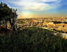 mount-zion-in-the-distance-as-viewed-from-the-mount-of-olives-charles-e-mccracken-ministries
