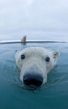 Cute Polar Bear | Amazing Pictures - close-up, unique view, framing, colors, background story, climate