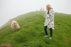 Sheep are ubiquitous in the Faroe Islands and love going for hikes.