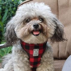 The RC Pets Cirque step-in dog harness is designed specifically for small breed dogs. Secures with velcro tabs. Available for dogs from 4 to 25 pounds. Small Puppies, Small Dogs, Dogs And Puppies, Small Dog Breeds, Small Breed, Fun Walk, Pomeranians, Dog Harness, Little Dogs