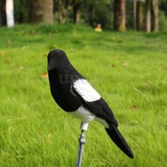 #Flocked magpie decoy #larsen trap decoying #shooting hunting fake bird realistic,  View more on the LINK: http://www.zeppy.io/product/gb/2/252413446423/
