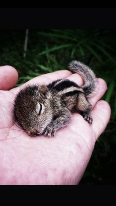 Bébé écureuil #FredericClad