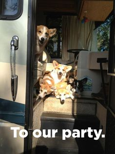 Having A Bad Day? Corgis To The Rescue