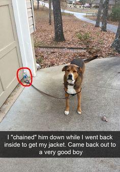 Resultado de imagen para good animal jokes