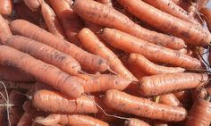 Paul's Farm SK Market Garden, Carrots, Vegetables, Food, Meal, Essen, Carrot, Vegetable Recipes, Hoods