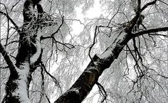 How Do Trees Survive The Winter Months?