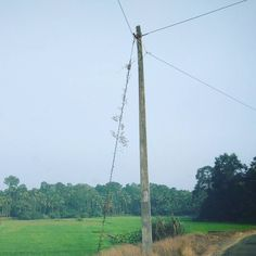 || Lonely Electric pole  . . . . . . . . . . . . . . . . . . . . . . . .  #nature #electricpole #sky #nature_lovers #nature_brilliance #ff_nature #naturephotography #natureshots #outdoors #nature_good #ig_today #earthgallery #tree_magic #tree #colors #clouds #natureworld_photography #light #weather #landscape #ig_naturelovers #ig_nature #skylovers #dusk #weather #ig_worldclub #world_shotz #naturegram #mothernature #lonely