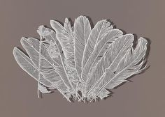 Bovey Lee~Trimming Feathers, 2012. Cut paper, Chinese xuan (rice) paper on silk