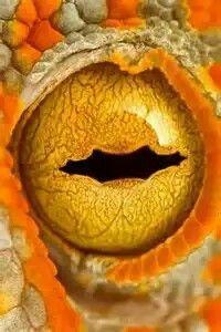 Snake Eyes.. Extremely close up macro photography