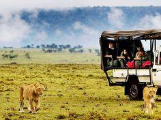 kenya masai mara safari